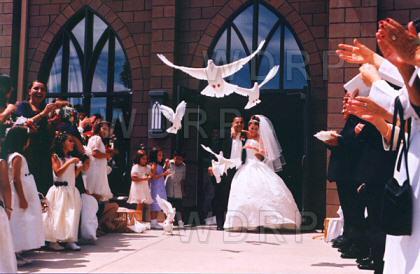 Graceful Doves